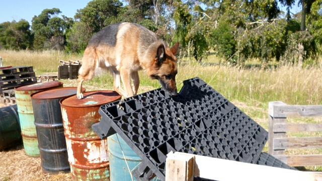 Jochen on another agility obstacle