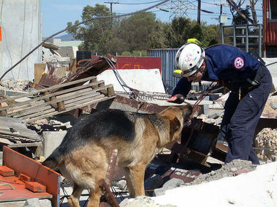 USAR dog Jochen is alerting a found 'victim'